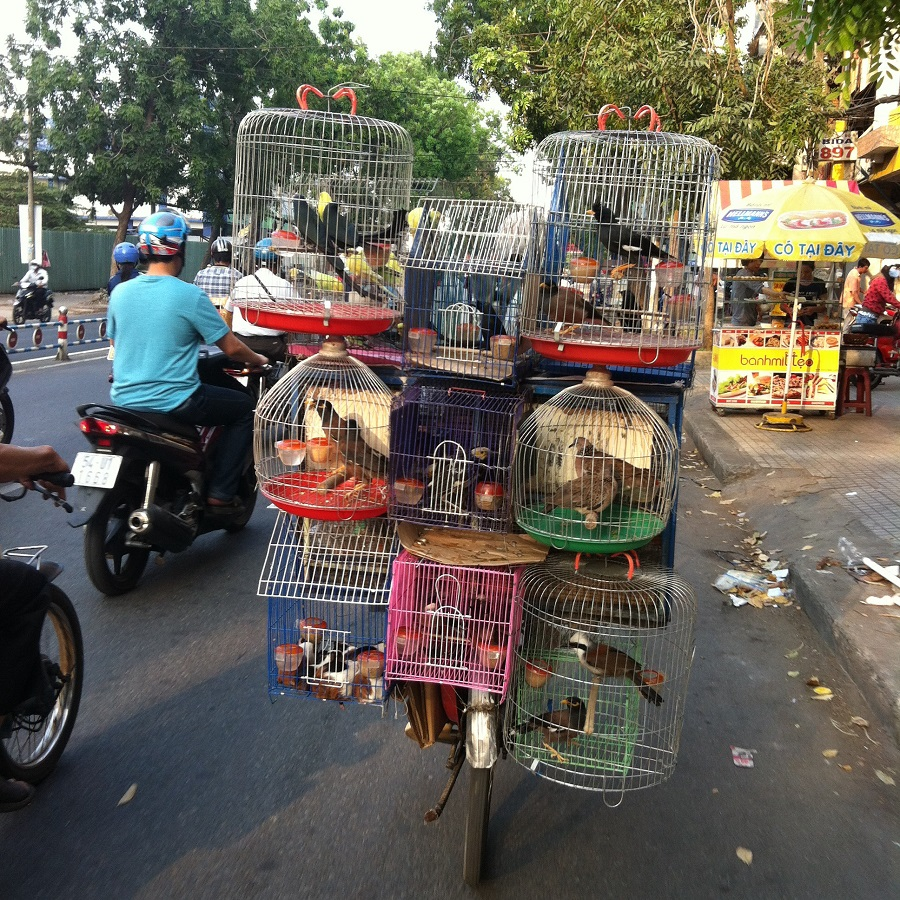 Bicyclist with cages mounted on back selling beautiful birds.