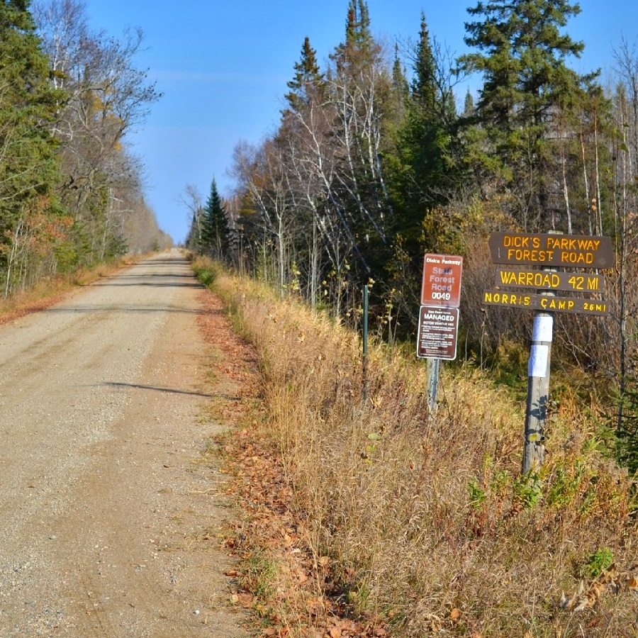 From this forest road many logging roads and trails intersect and are ready yo explore.