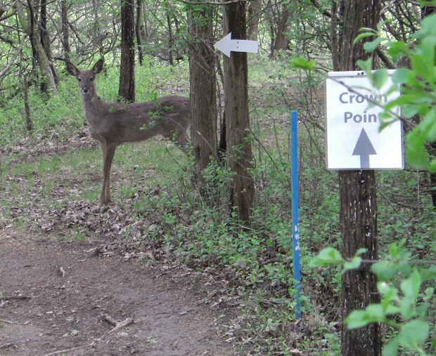 With a full moon gracing the night skies the next couple days, even in the daytime it is not uncommon to see a deer or other wildlife pop out from the bushes onto a road or trail in front of you.