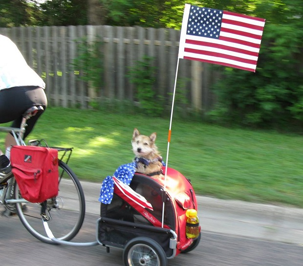 Most pets enjoy these holiday bike rides too.